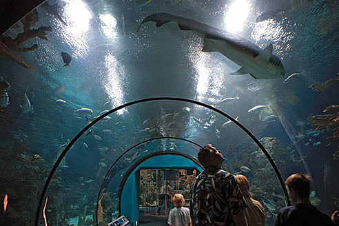Palm Beach At Moody Gardens Celebrates 25 Years Video